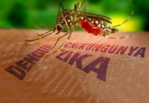 zika-480x330